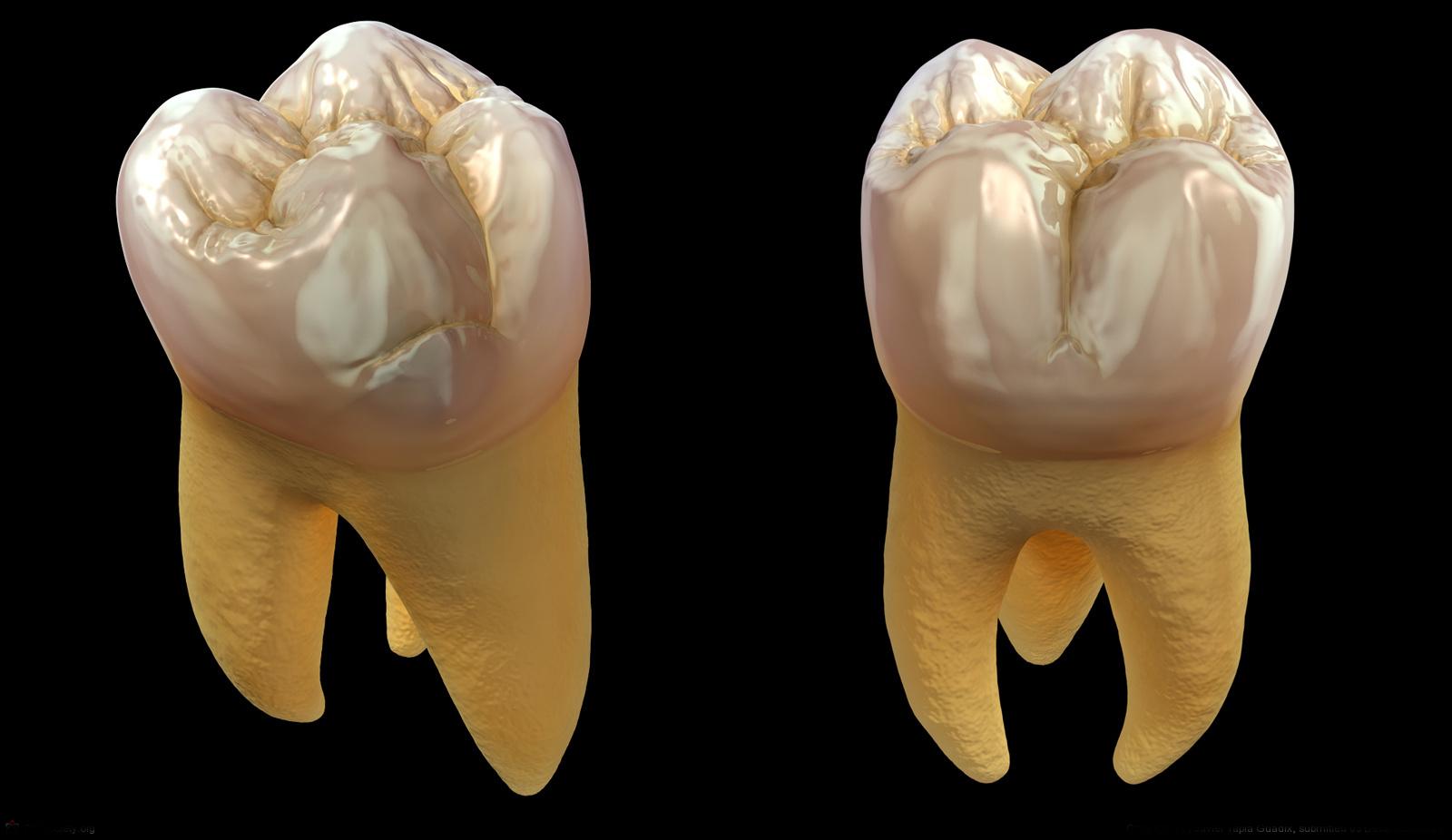 Azı Dişleri