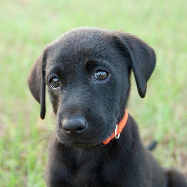 Kara Köpekleri Öldürelim Mi ?