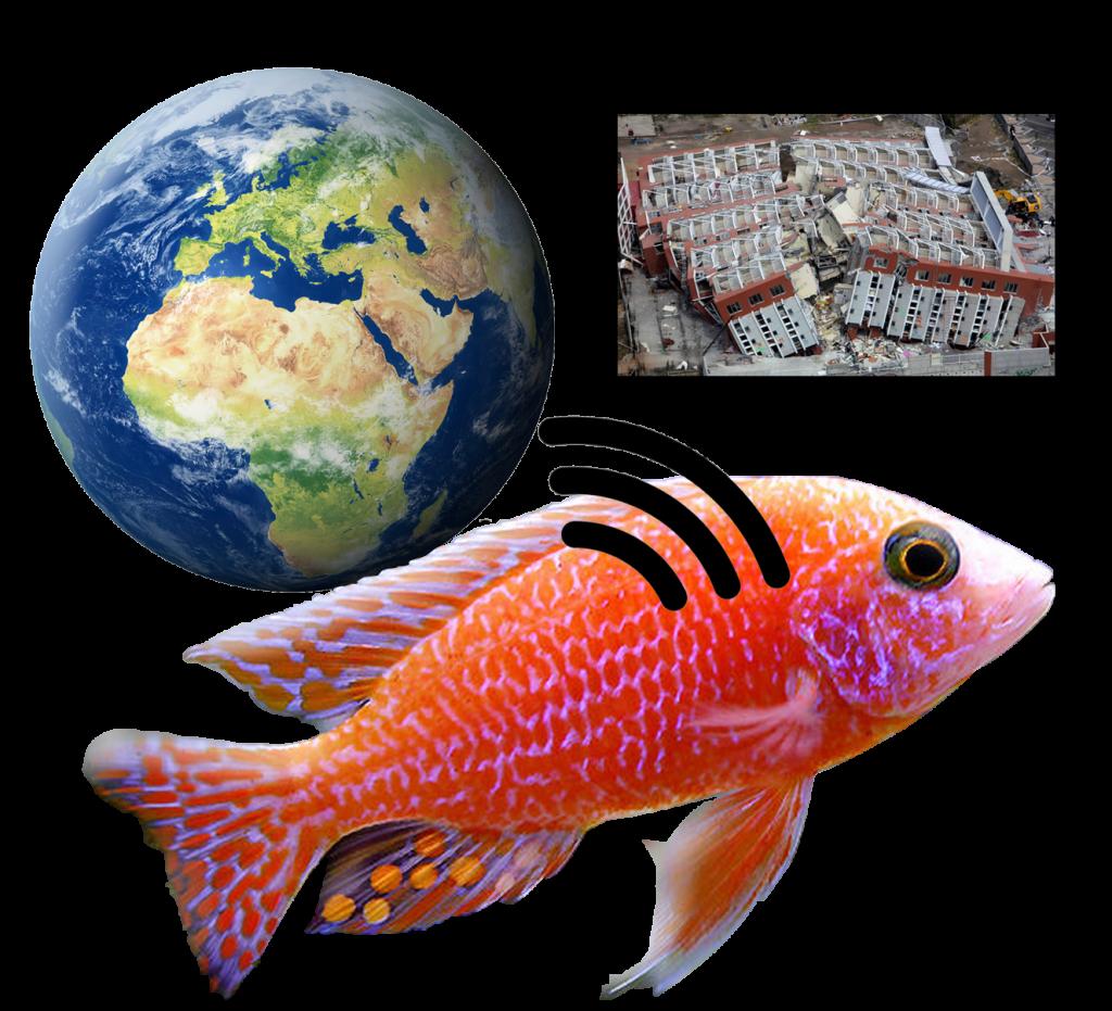 Depremlere Sebep Olan Balık