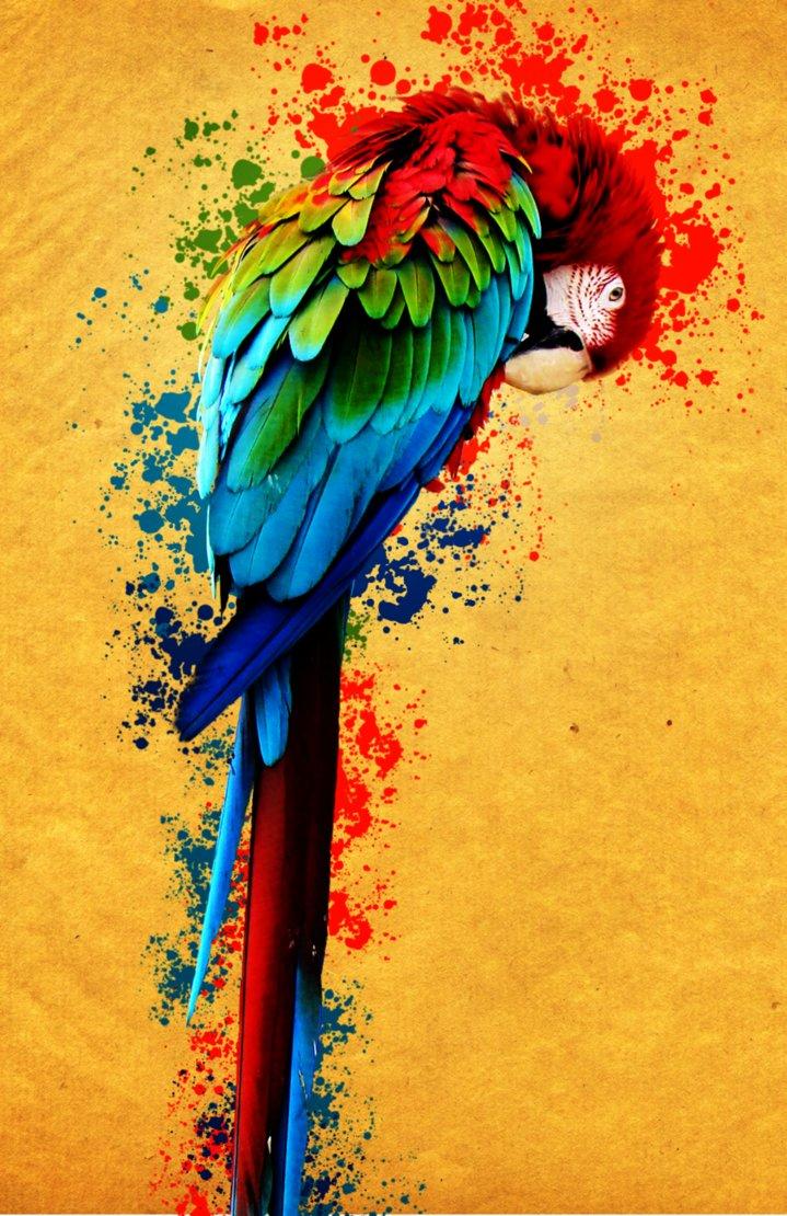 Rengarenk Bir Papağan