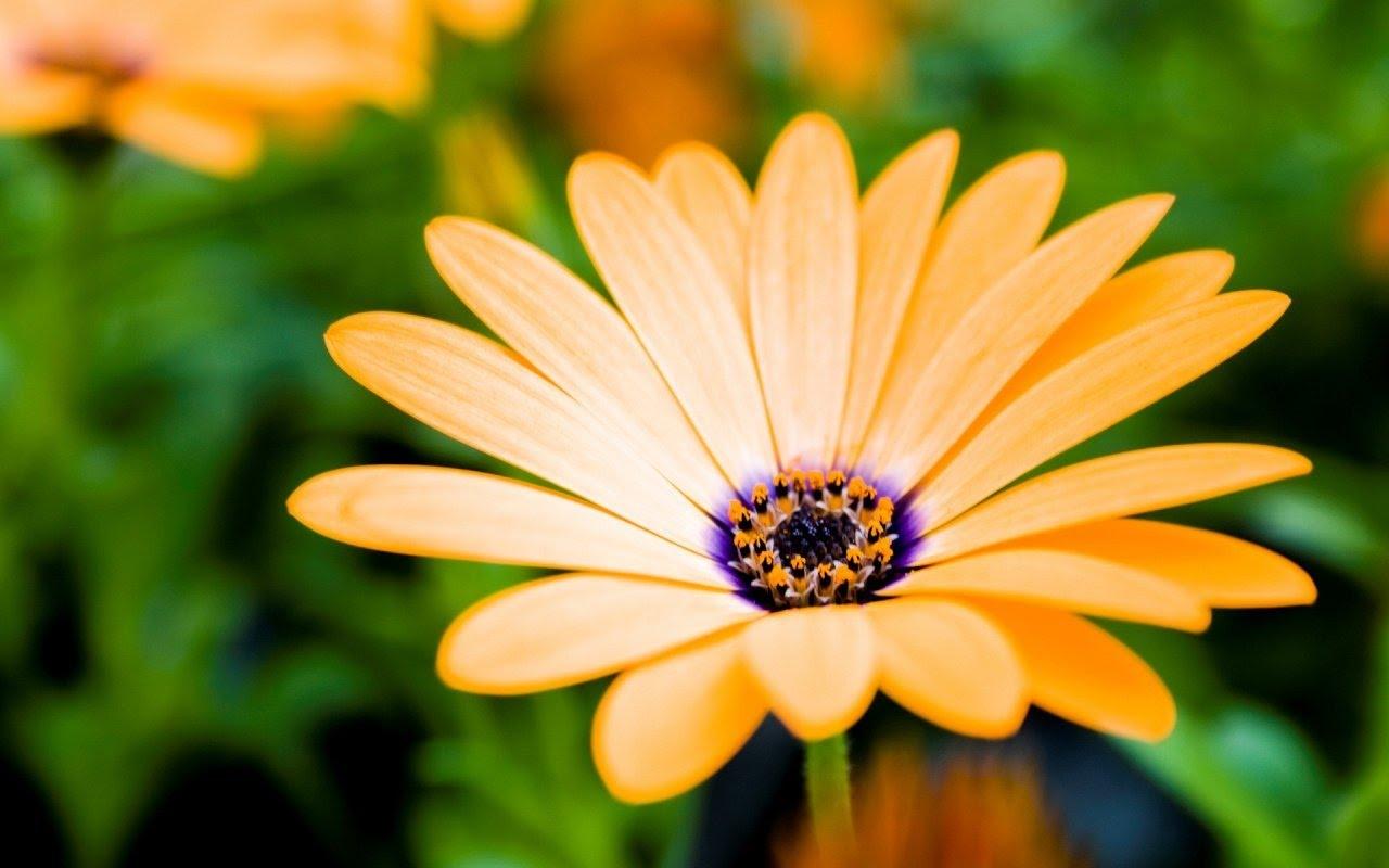 Allah'ın Sanatı Kendini Bir Çiçeğin Renginde Gösterebilir.